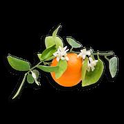 Orange blossom sillo