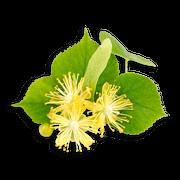 Lime blossom sillo