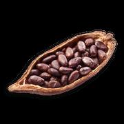 Cocoa sillo