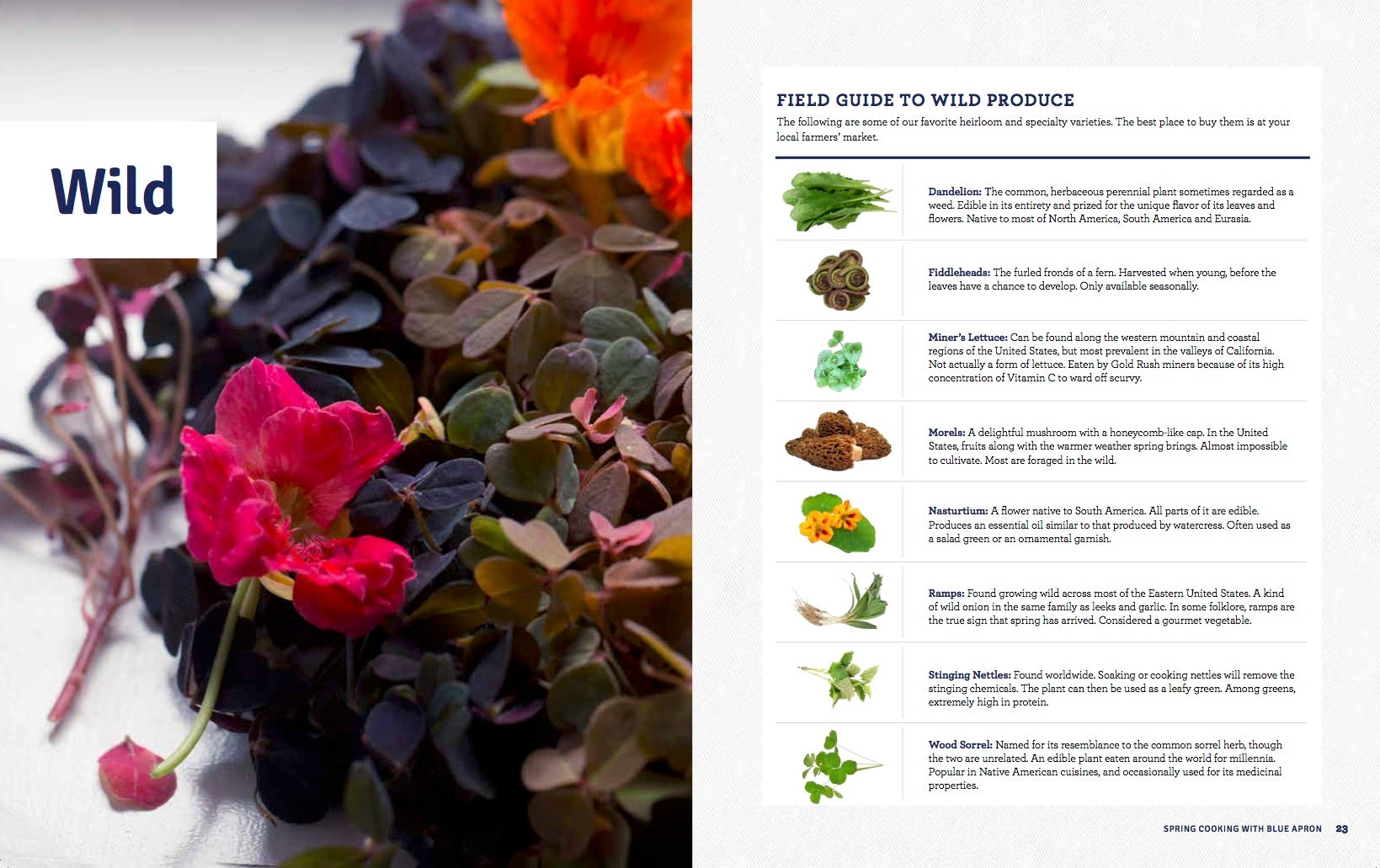Blue apron box return - Field Guide To Spring S Produce