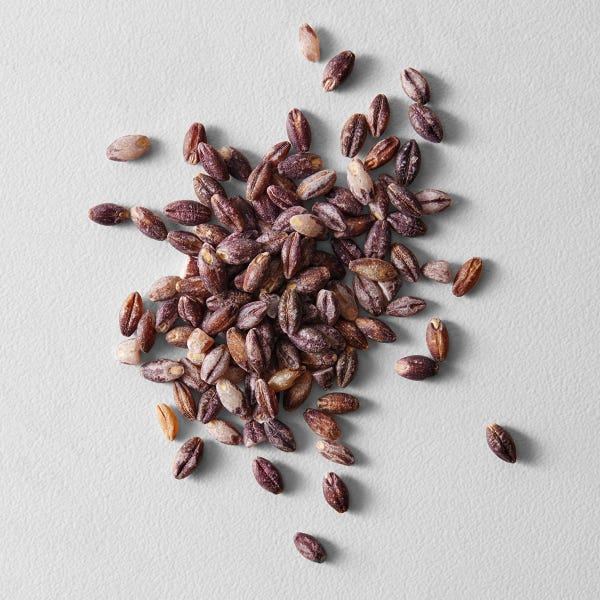 Purple barley ec 90475 web