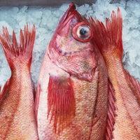 Rockfish thumb