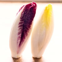 Beauty   endive 9875 thumb