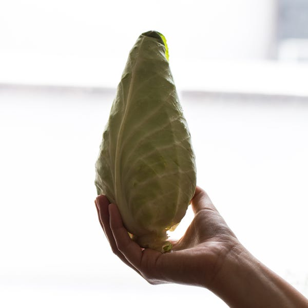 Beauty 20  20cone 20cabbage 20  200227