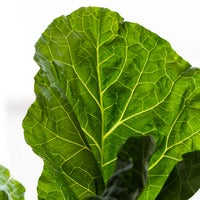 Beauty 20  20collards 20 20  200247 thumb