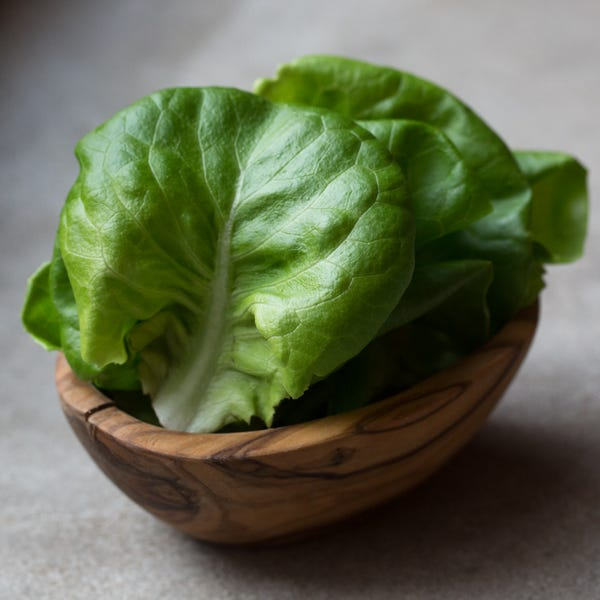 Beauty butterhead 20lettuce 20  205912