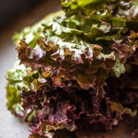 Red 20leaf 20lettuce 20  207040 thumb