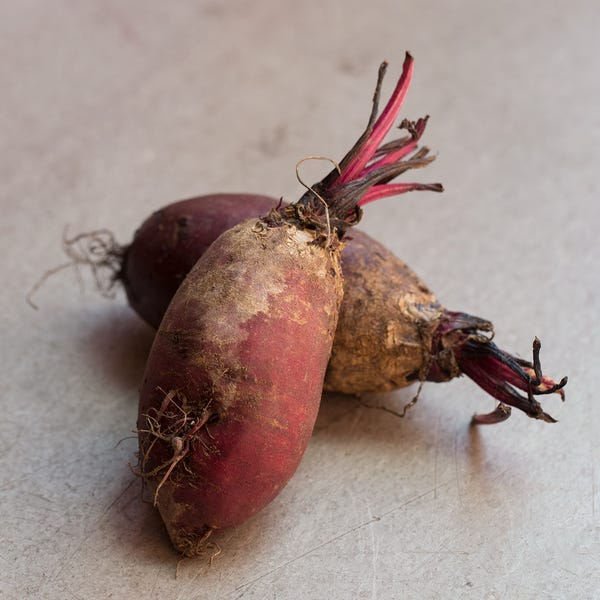 Beauty cylindrabeets 3395